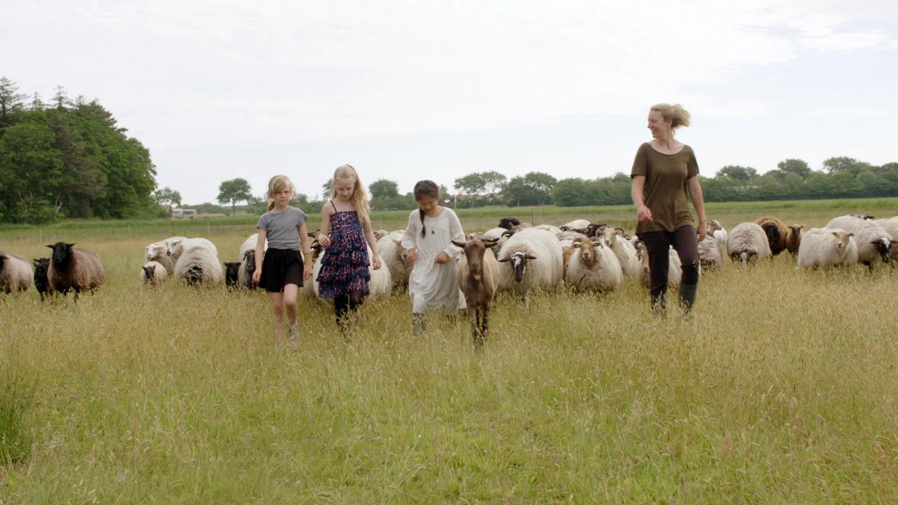 still schapen totaal